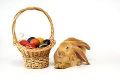 кролик пасхи Стоковая Фотография