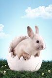 кролик пасхи Стоковое Изображение RF