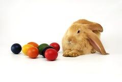 кролик пасхи Стоковое Изображение