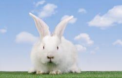 кролик пасхи Стоковые Изображения