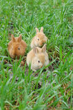 кролик посадки Стоковая Фотография