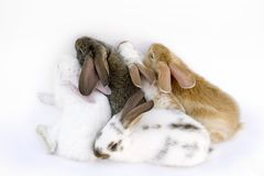кролик семьи Стоковое Изображение