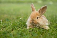 кролик травы золота младенца Стоковые Фото
