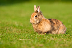 кролик травы малый Стоковое Фото