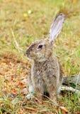кролик травы осени Стоковая Фотография RF