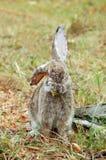 кролик травы осени Стоковые Фото