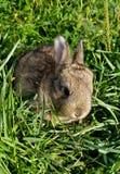 кролик травы серый зеленый Стоковые Изображения
