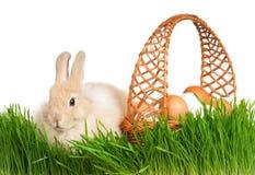 кролик травы Стоковые Изображения