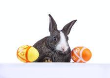 кролик удерживания пасхи знамени Стоковая Фотография