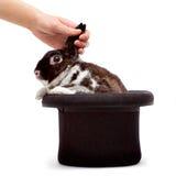 кролик шлема Стоковое Изображение