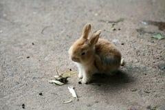 кролик стоковые фотографии rf