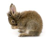 кролик Стоковое Фото