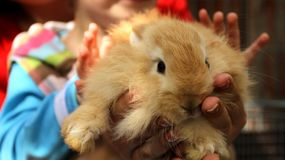 Кролик Redhead в зоопарке стоковая фотография rf