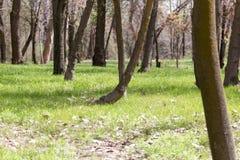 Крона дерева в парке на природе Стоковое Изображение RF