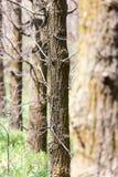 Крона дерева в парке на природе Стоковые Изображения