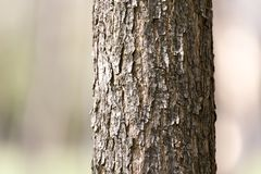 Крона дерева в парке на природе Стоковая Фотография