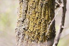 Крона дерева в парке на природе Стоковое Изображение