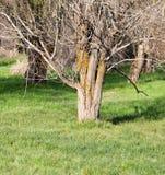 Крона дерева на природе Стоковые Фотографии RF