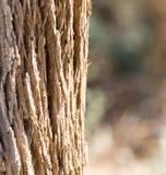 Крона дерева на природе Стоковая Фотография RF
