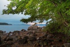 Крона дерева с сочной листвой на береге моря во время рассвета Стоковая Фотография