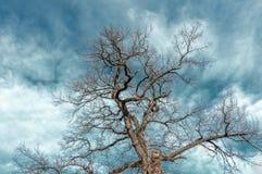 Крона дерева против голубого неба Стоковая Фотография RF