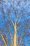 Крона дерева с голубым небом Стоковые Изображения