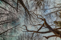 Крона дерева Стоковая Фотография