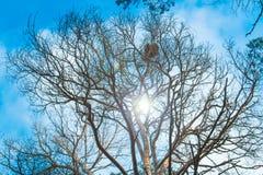 Крона лиственного дерева с гнездом ` s птицы на предпосылке яркого голубого неба и солнца в осени в лесе Стоковые Изображения