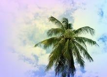 Крона пальмы кокосов на облачном небе Тропический год сбора винограда природы тонизировал фото Стоковые Фотографии RF