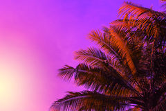 Крона пальмы на предпосылке неба захода солнца Фантастические красные лист неба и ладони тонизировали фото Стоковое Фото