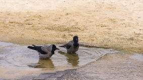 2 кроны в воде Стоковое Фото
