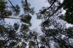 Кроны дерева Стоковое фото RF