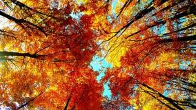 Кроны деревьев в осени сток-видео