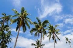 Кроны пальмы против неба Стоковое Фото