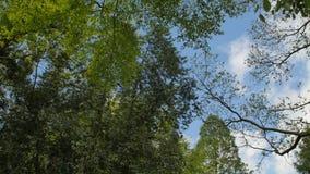 Кроны разнообразия леса деревьев весной против голубого неба с солнцем Нижний взгляд деревьев сток-видео