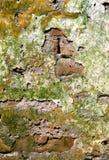 кроша стены Стоковое Изображение