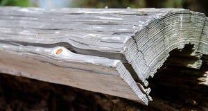 Крошенный луч около старта шлюпки в парке Вашингтона Стоковое фото RF