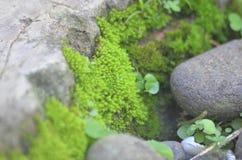 Крошечная зеленая трава Стоковые Фотографии RF