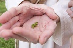 Крошечная зеленая лягушка Стоковое Изображение