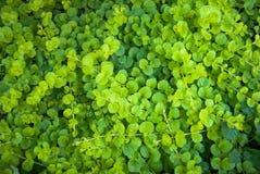 Крошечная предпосылка листьев, outdoors фотография зеленых листьев Стоковые Фото