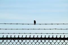 Крошечная птица сидя на колючей проволоке над цепью соединила загородку Стоковая Фотография RF