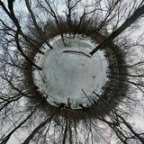 Крошечная планета в ледистом лесе Стоковое Изображение