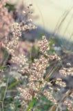 Крошечная трава цветка на ослабляет время сфокусируйте мягко Пастельный цвет Стоковое Изображение