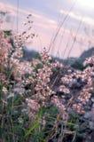 Крошечная трава цветка на ослабляет время сфокусируйте мягко Пастельный цвет Стоковая Фотография