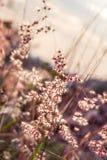 Крошечная трава цветка на ослабляет время сфокусируйте мягко Пастельный цвет Стоковая Фотография RF