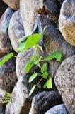 Крошечная трава Стоковые Фото