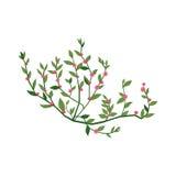 Крошечной розовой иллюстрация полевого цветка нарисованная рукой детальная Стоковые Фото