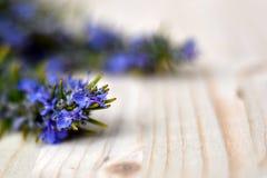 Крошечные голубые цветки розмаринового масла стоковая фотография rf