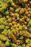 Крошечные живущие зеленые вещи Стоковая Фотография RF