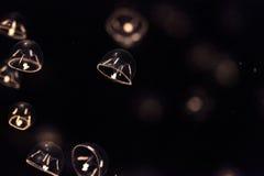 Крошечные медузы зонтика вызвали indicans Eutonia Стоковая Фотография